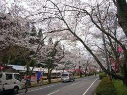 Senbonsakura_002_1