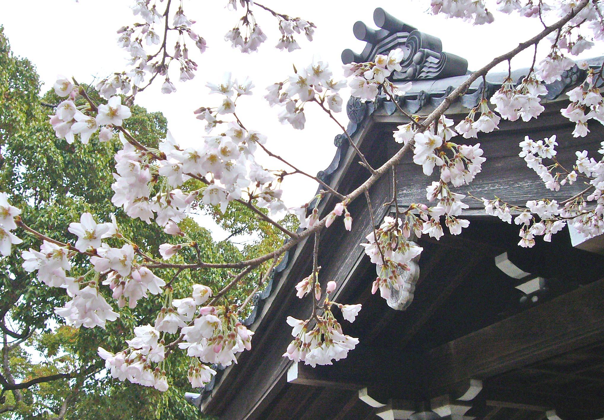 Usuzumi_004