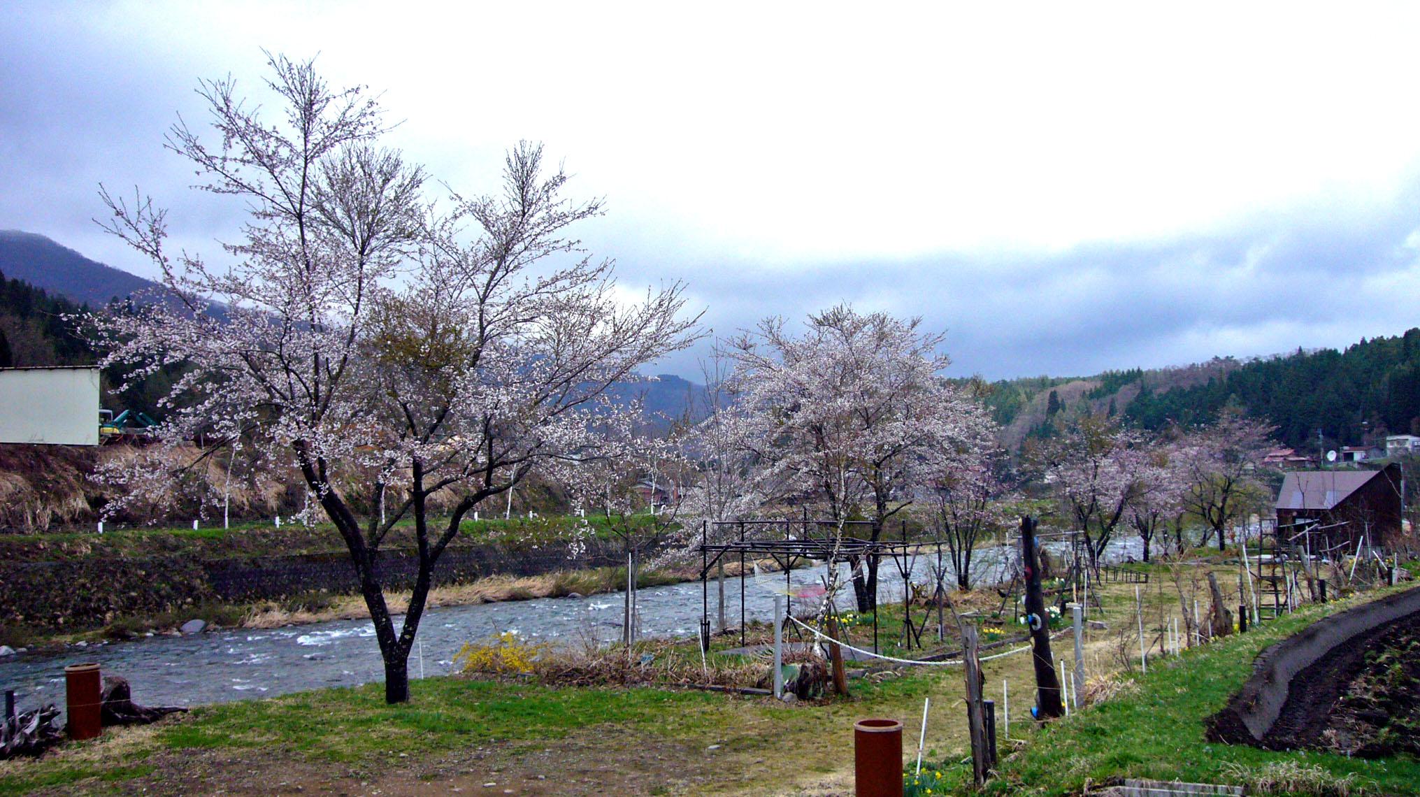 Gw_syokawa_003